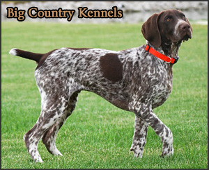 Big Country Kennels - Featured Breeder