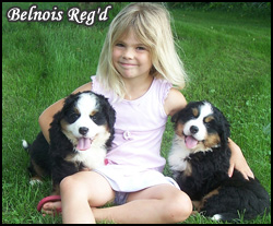 Belnois Reg'd Bernese Mountain Dogs - Featured Breeder