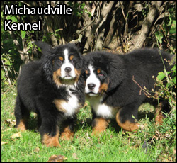 Featured Breeder - Michaudville Kennel