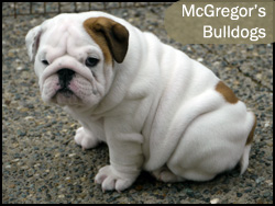 McGregor's Bulldogs