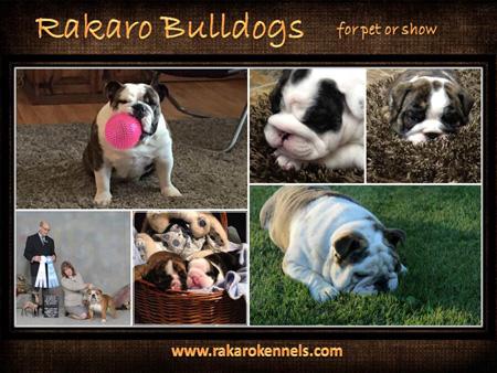 Rakaro Bulldogs