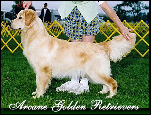Arcane Golden Retrievers