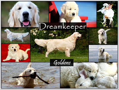 Dreamkeeper Goldens