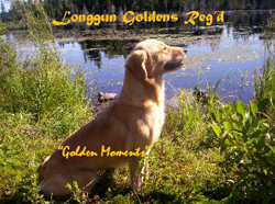 Longgun Goldens