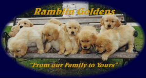 Ramblin Goldens