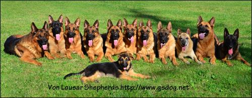 German Shepherd Dog Breeders German Shepherd Puppies German