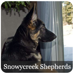 Snowycreek Shepherds