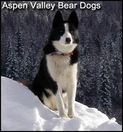 Aspen Valley Kennels