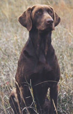 Huntersbest Labradors, Perm. Reg'd