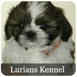 Lurians Kennel