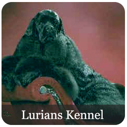Lurians Kennel Registered