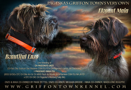 Wirehaired Pointing Griffon Breeders - Canada's Guide to Dogs