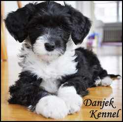 Danjek Kennel