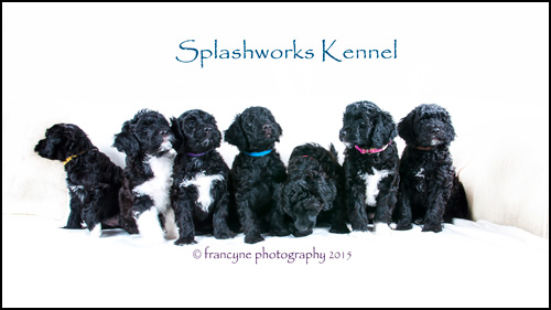 Splashworks Kennel