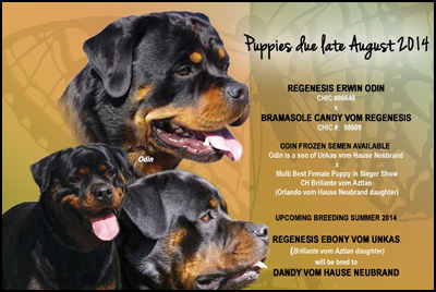 how to become a registered dog breeder in ontario