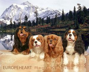 Cavalier Breeders - Europeheart Kennel