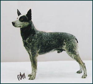 stumpy tail cattle dog canada s guide to dogs