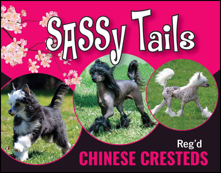 Chinese Crested Dog Breeders Canadas Guide To Dogs