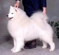 Ardrossan Dog Kennels