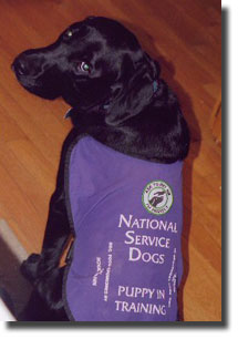 Canadian Service Dog Regulations - My Magic Dog
