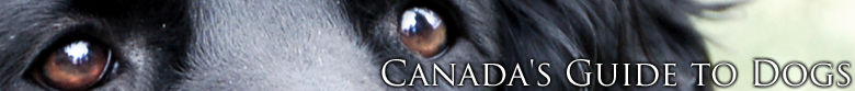 Canada's Guide to Dogs - www.canadasguidetodogs.com
