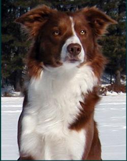 Dog Breeders Association Ontario